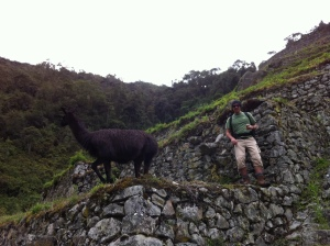 Machu Picchu and passport finding party rum!! 11-11-12 153