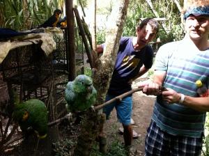goofy birds