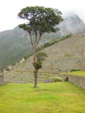 Lake Titicaca and Machu Picchu 11-5-31 855