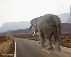 elephant-walking-journey-road